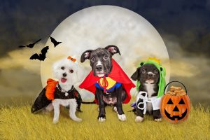 Five Tips To Keep Your Pet Safe This October